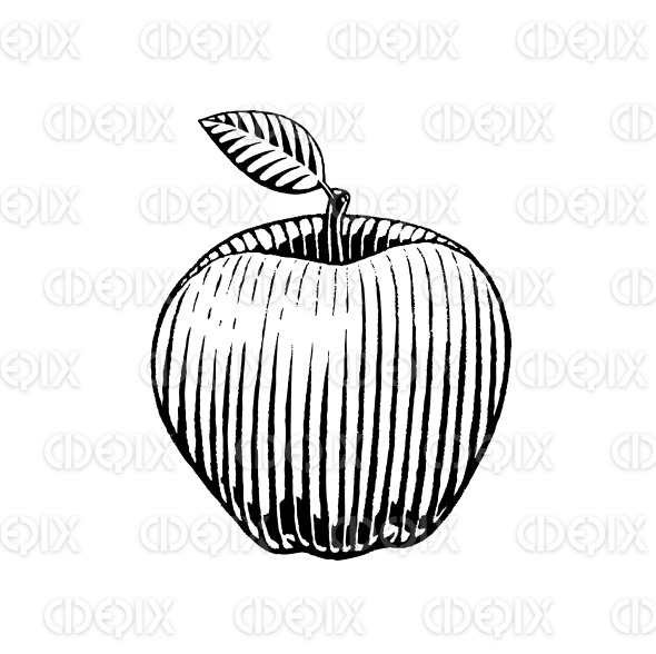 Vectorized Ink Sketch of an Apple stock illustration