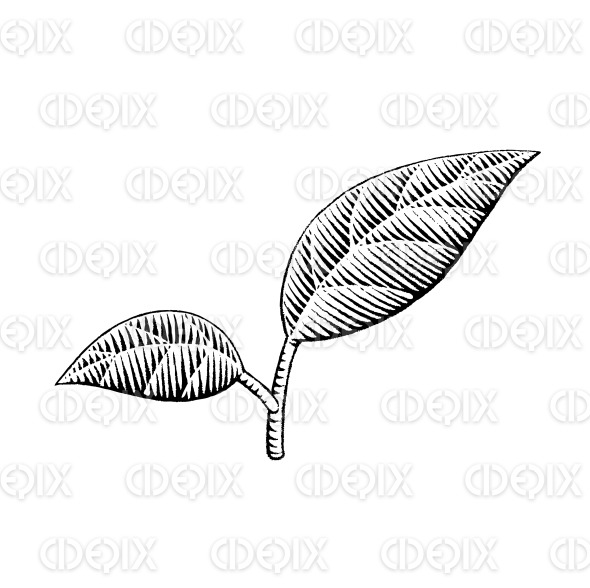 Vectorized Ink Sketch of Leaves stock illustration
