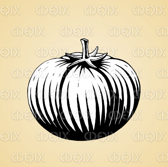 Ink Sketch of a Tomato with White Fill stock illustration