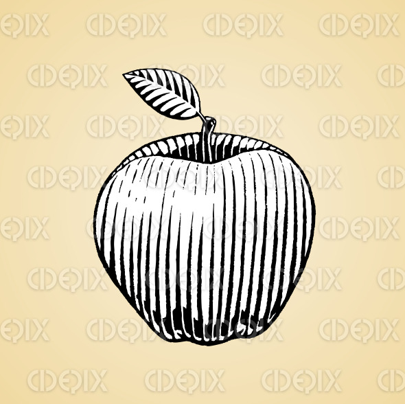 Ink Sketch of an Apple with White Fill stock illustration