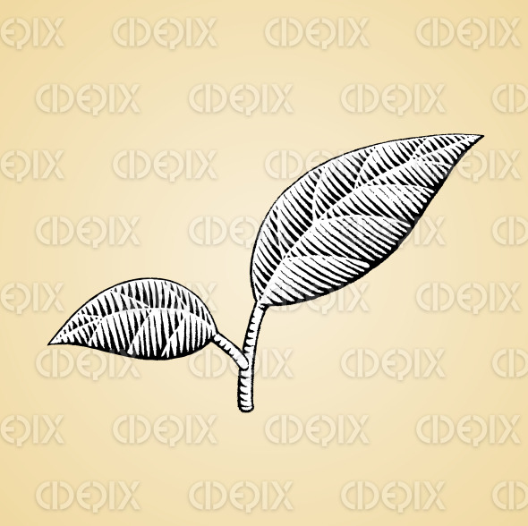 Ink Sketch of Leaves with White Fill stock illustration