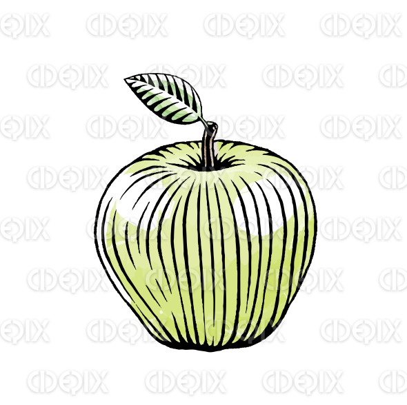 Ink and Watercolor Sketch of a Green Apple stock illustration