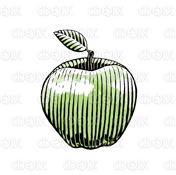 Ink and Watercolor Sketch of an Apple stock illustration