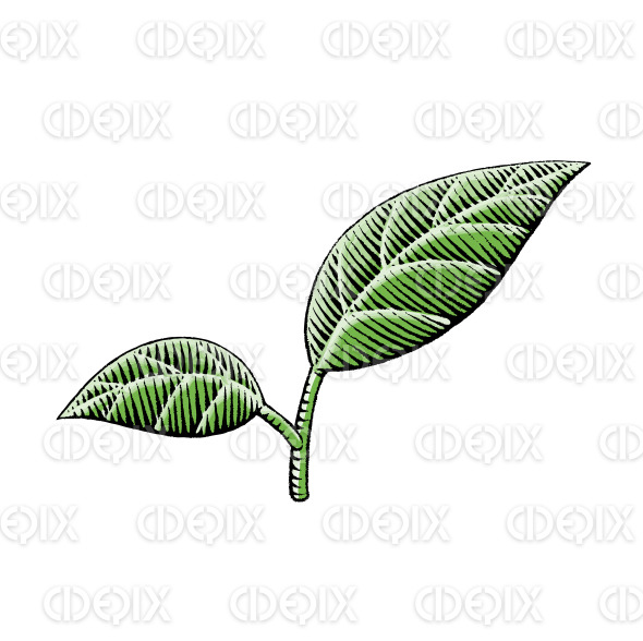 Ink and Watercolor Sketch of Leaves stock illustration