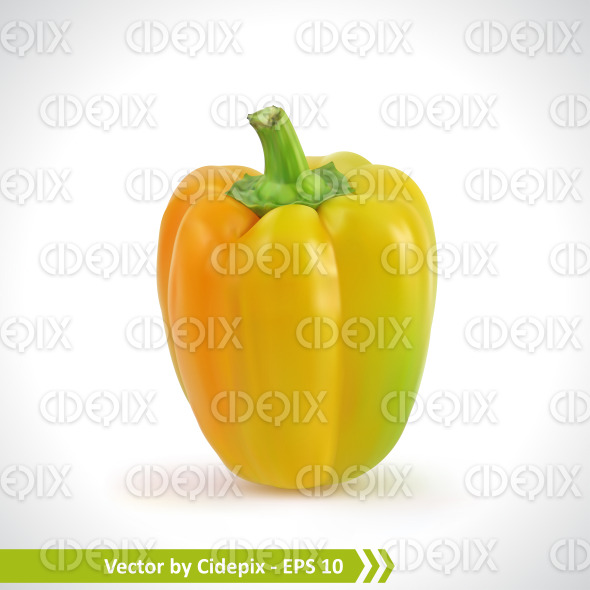 Realistic Illustration of a Yellow Pepper stock illustration