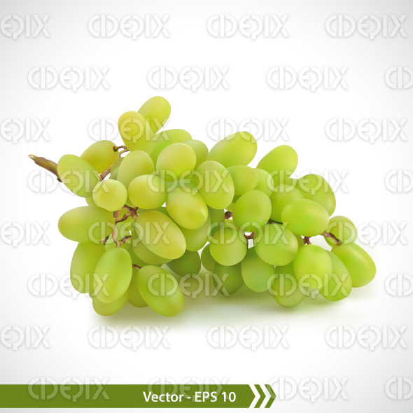 Realistic Illustration of Green Grapes stock illustration
