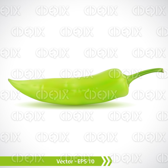 Realistic Illustration of a Green Pepper stock illustration
