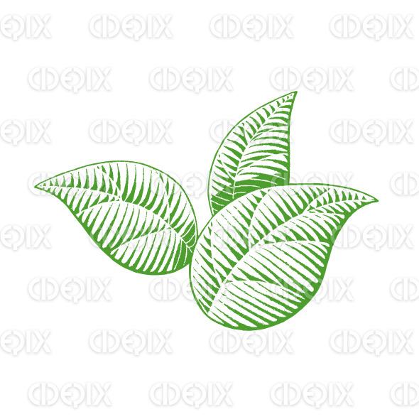 Green Vectorized Ink Sketch of Leaves Illustration stock illustration