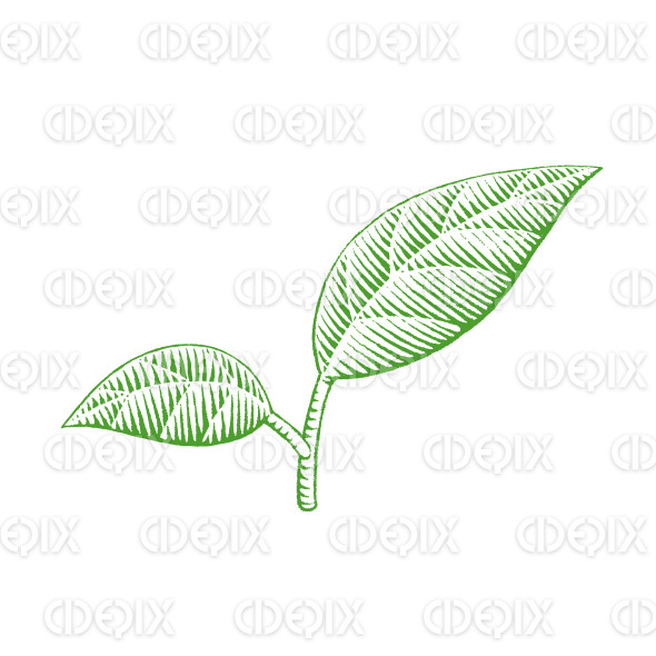 Green Vectorized Ink Sketch of Leaves Illustration stock illustration