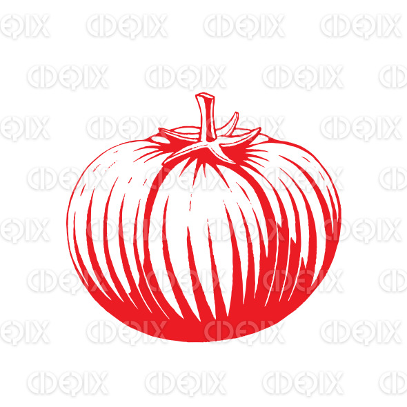 Red Vectorized Ink Sketch of Tomato Illustration stock illustration
