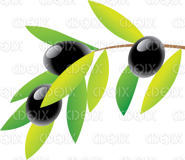 olive branch, green leaves and black olives stock illustration