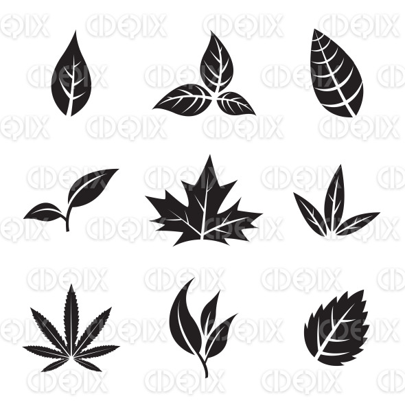 Black Leaves isolated on white stock illustration
