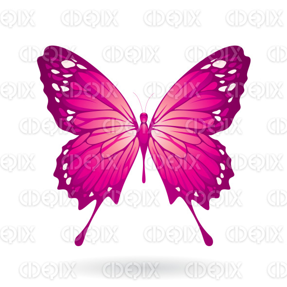 Magenta Butterfly with Classic Wings stock illustration
