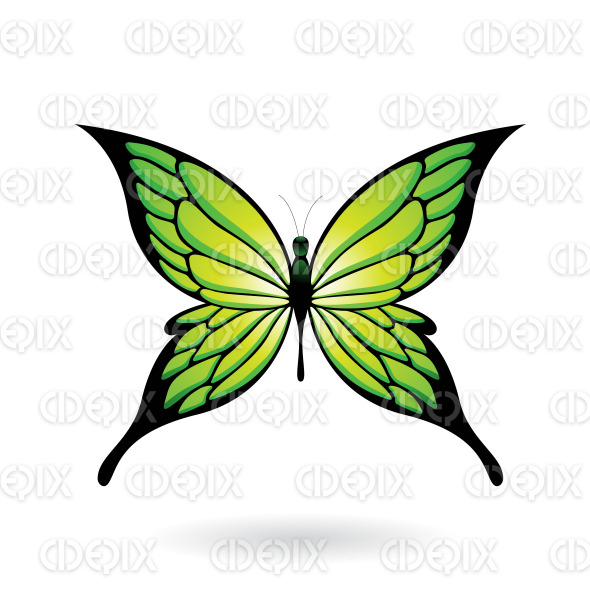 Green and Black Fairy Wing Butterfly stock illustration