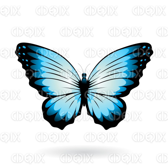 Blue and Black Wide Wing Butterfly stock illustration