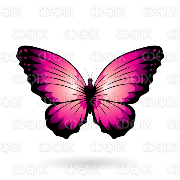 Magenta and Black Wide Wing Butterfly stock illustration