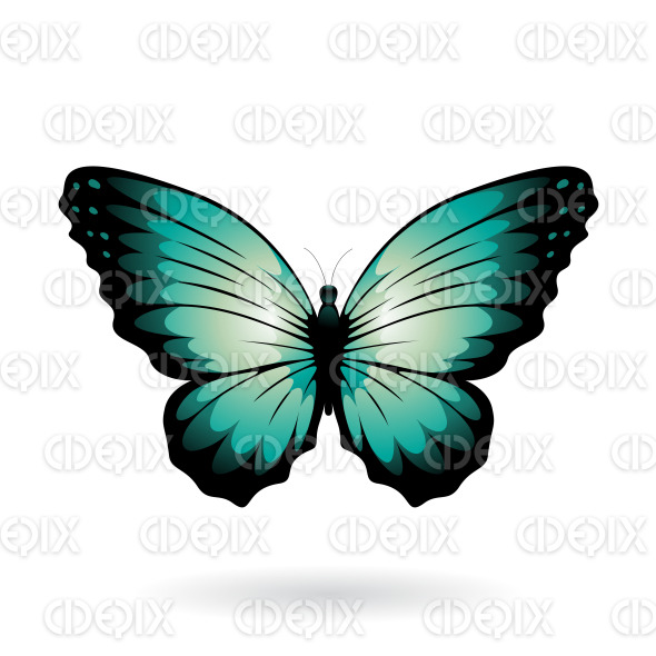 Persian Green and Black Wide Wing Butterfly stock illustration