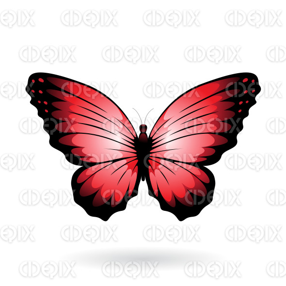Red and Black Wide Wing Butterfly stock illustration