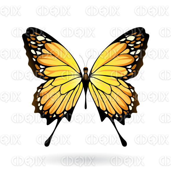 Yellow and Black Butterfly stock illustration