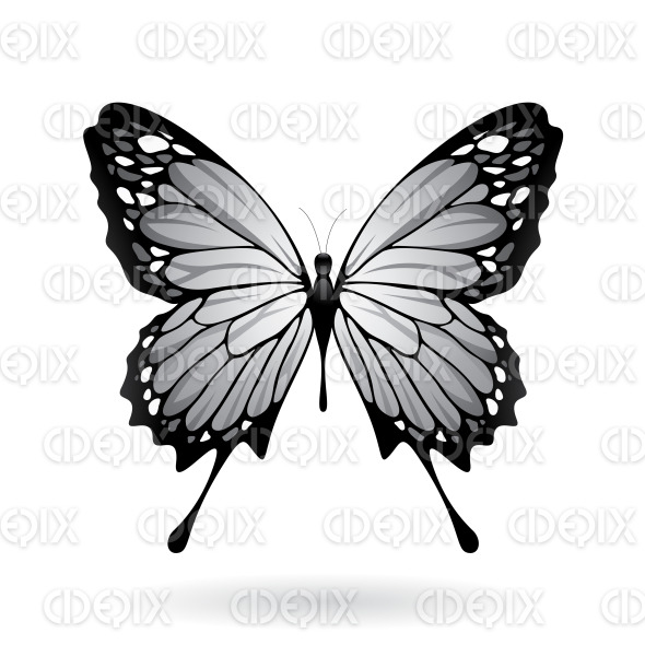 Grey and Black Butterfly stock illustration