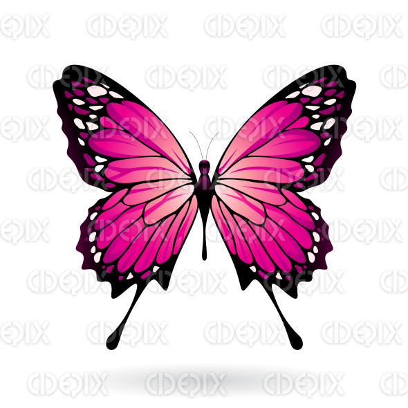 Magenta and Black Butterfly stock illustration