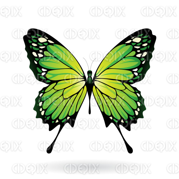 Green and Black Butterfly stock illustration