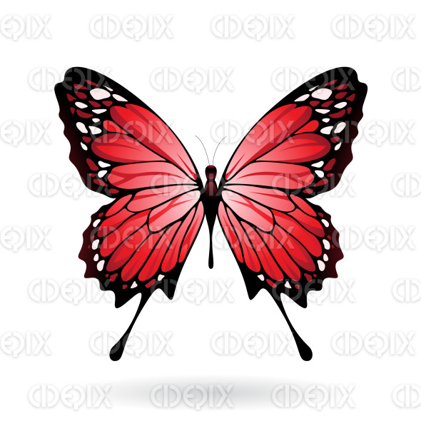 Red and Black Butterfly stock illustration