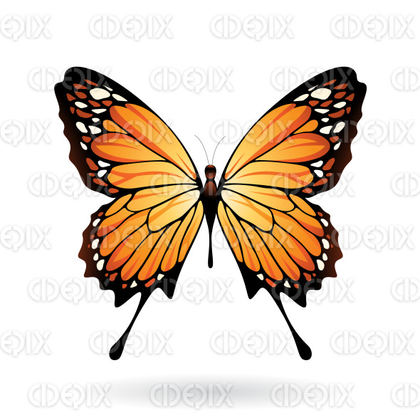 Orange and Black Butterfly stock illustration