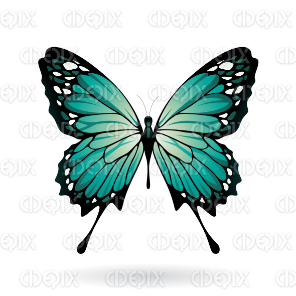 Persian Green and Black Butterfly stock illustration